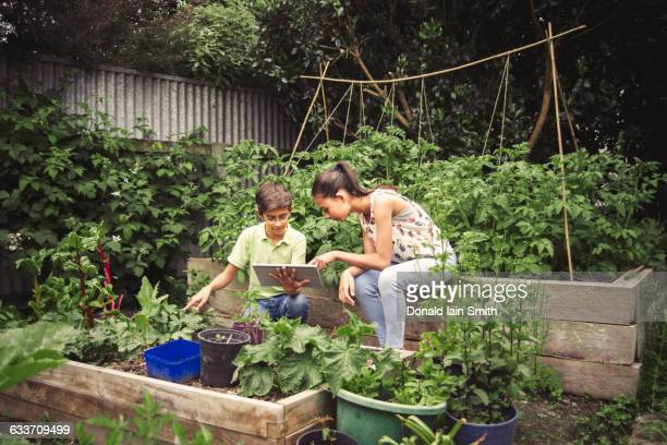 Mixed race children using digital tablet in garden