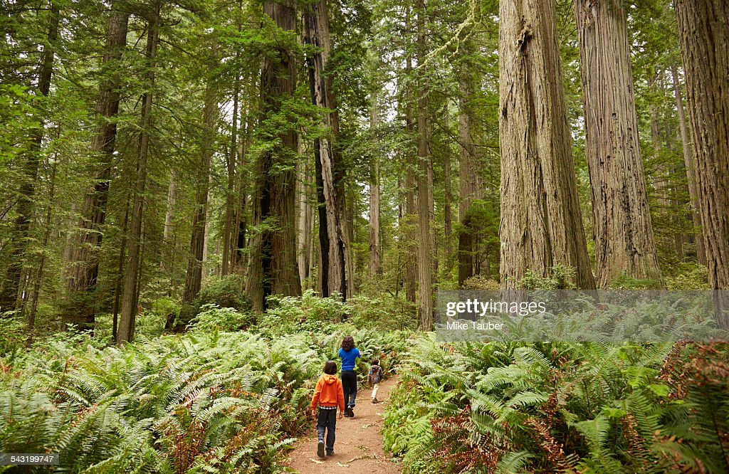 Mixed race children walking in forest : Stock Photo