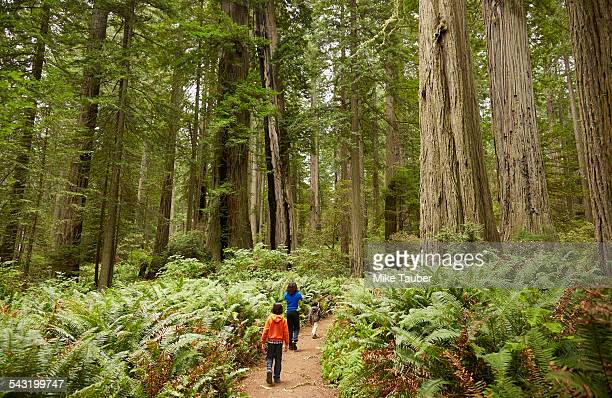 Mixed race children walking in forest