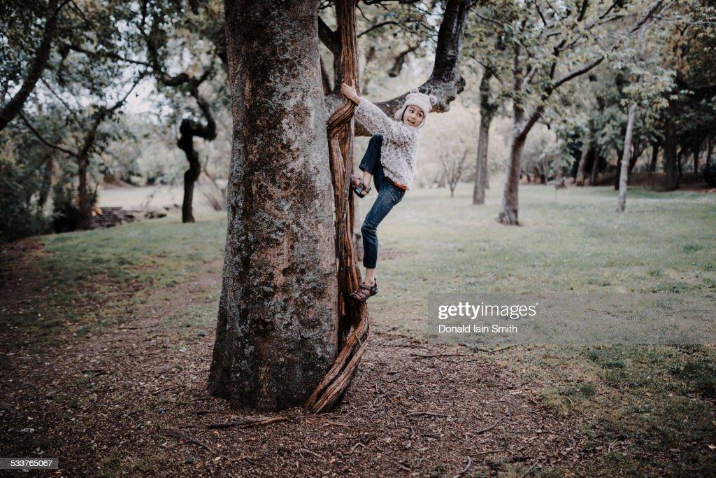 Mixed race girl climbing tree in park : Foto stock