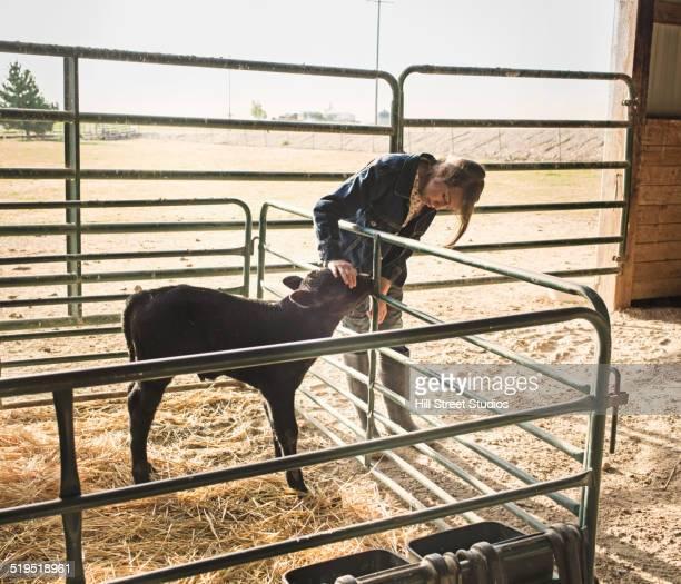 Mixed race girl petting calf in barn