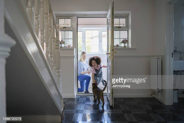 mixed race girl petting family cat before leaving for school - tabby stock pictures, royalty-free photos & images