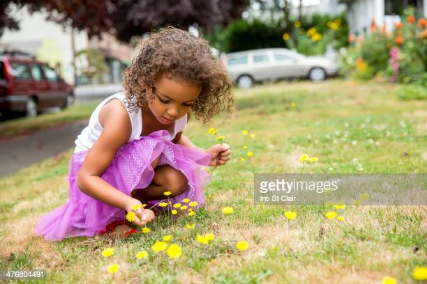 Mixed race girl picking dandelions on front lawn