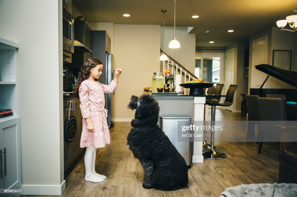 Mixed race girl training dog in kitchen : Stock Photo
