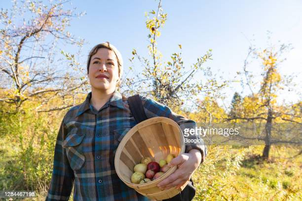mixed race non gender person with apple picking basket in upstate new york - printed sleeve stock pictures, royalty-free photos & images