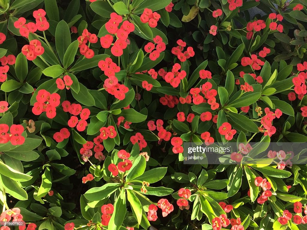 Mixed red flowers and green leaves : Stock Photo