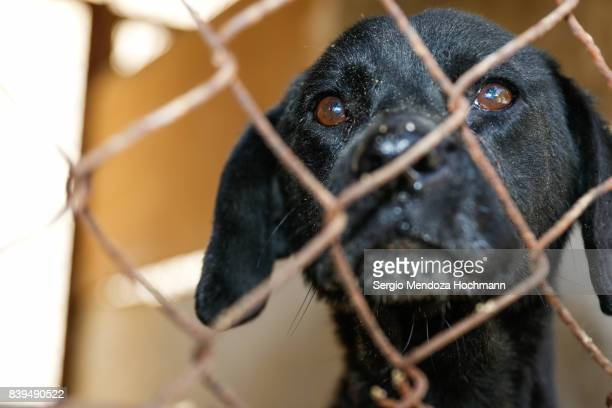 A mixed-breed dog behind a fence in a dog shelter in Mexico City