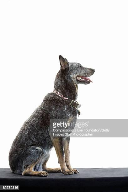 "mixed-breed dog - ""compassionate eye"" foto e immagini stock"