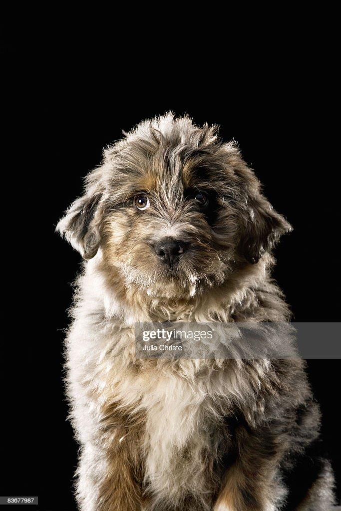 Mixed-Breed Dog, portrait : Stock Photo