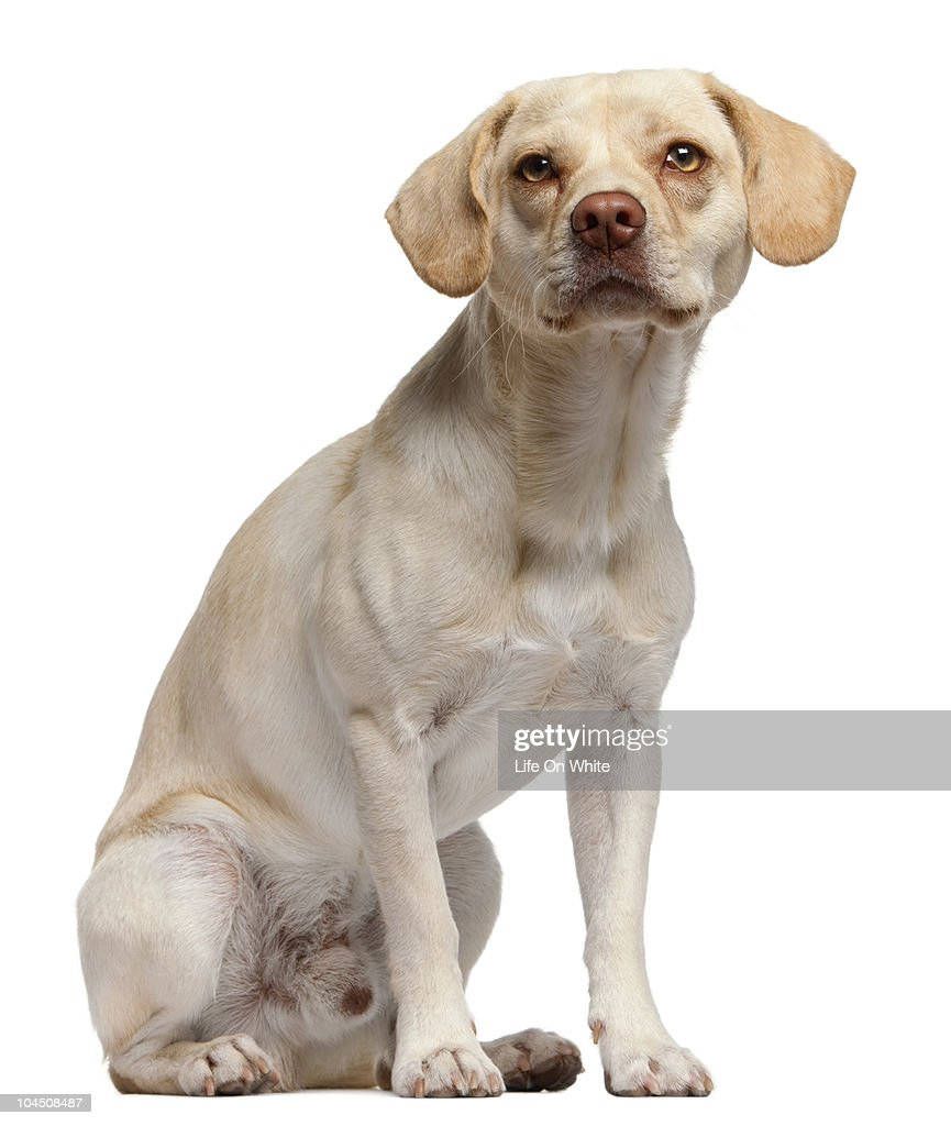mixed-breed (12 months old) : Stock Photo