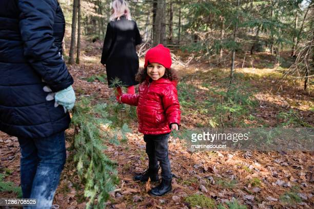 """mixed-race family picking up fir branch in forest for diy project. - """"martine doucet"""" or martinedoucet stock pictures, royalty-free photos & images"""