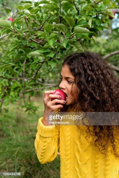 mixed-race little girl eating apple in orchard. - kid girl eating apple stock photos and pictures