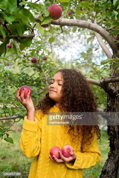 """mixed-rennen kleines mädchen pflücken äpfel im obstgarten. - """"martine doucet"""" or martinedoucet stock-fotos und bilder"""