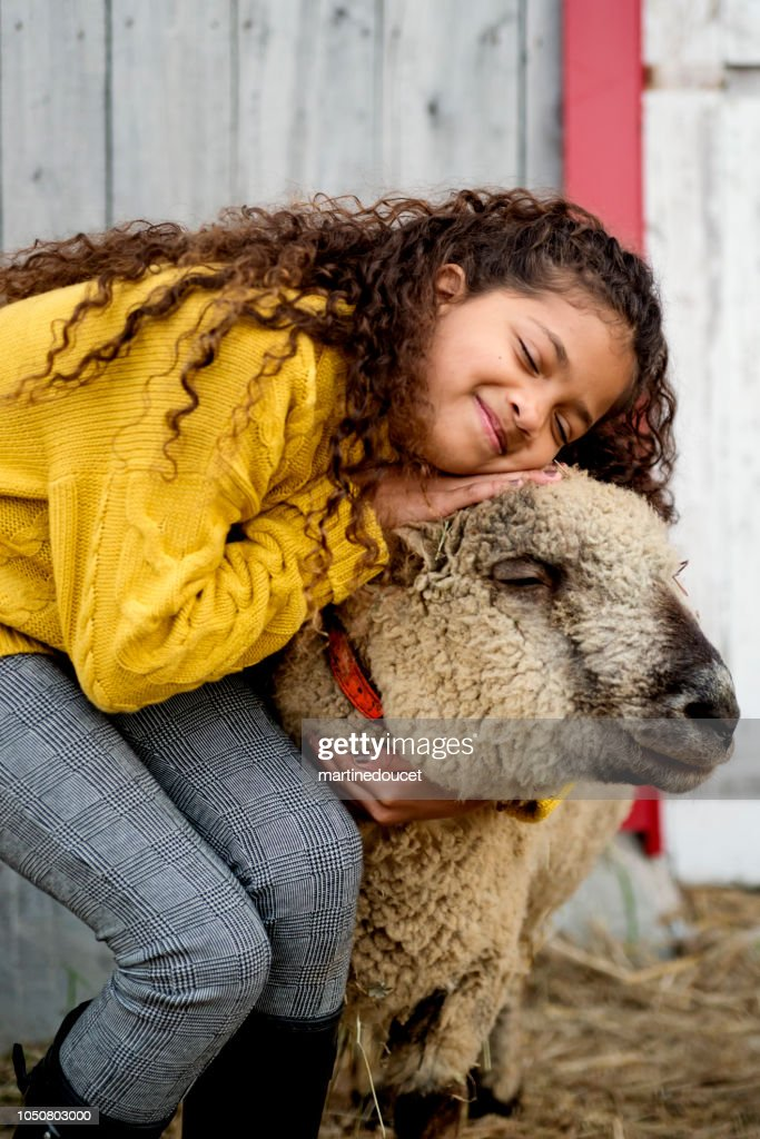 Mixed-race little girl playing with a sheep on a farm. : Stock Photo