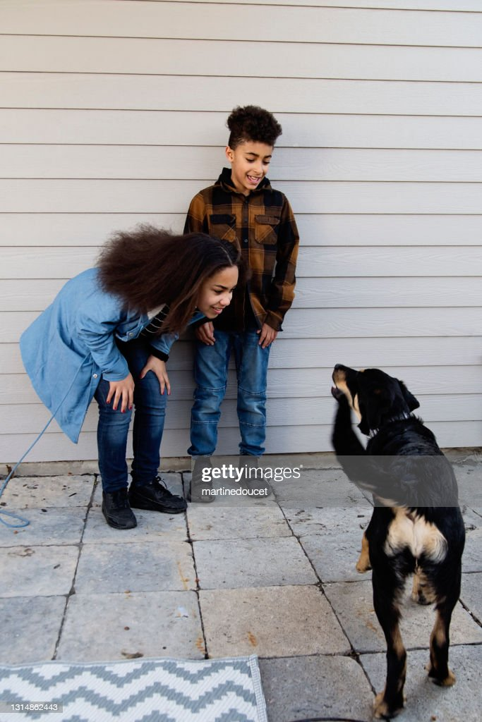 Mixed-race preteen siblings playing with dog outdoors. : Stock Photo