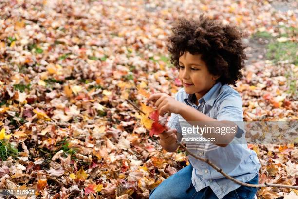 """mixed-race young boy playing with autumn leaves in urban park. - """"martine doucet"""" or martinedoucet stock pictures, royalty-free photos & images"""