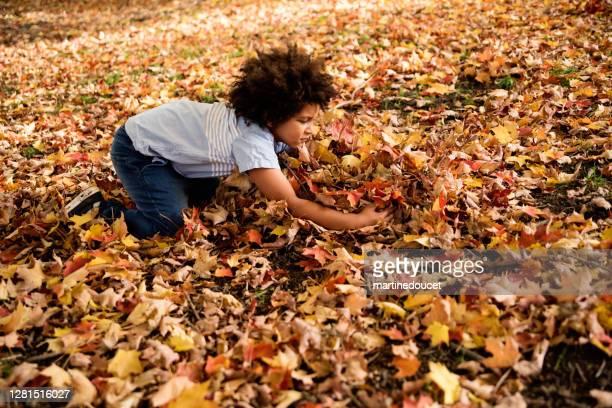 """garoto mestiço brincando com folhas de outono no parque urbano. - """"martine doucet"""" or martinedoucet - fotografias e filmes do acervo"""