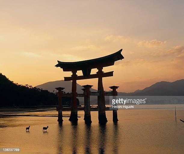 Miyajima Island, Saeki District, Hiroshima, Japan