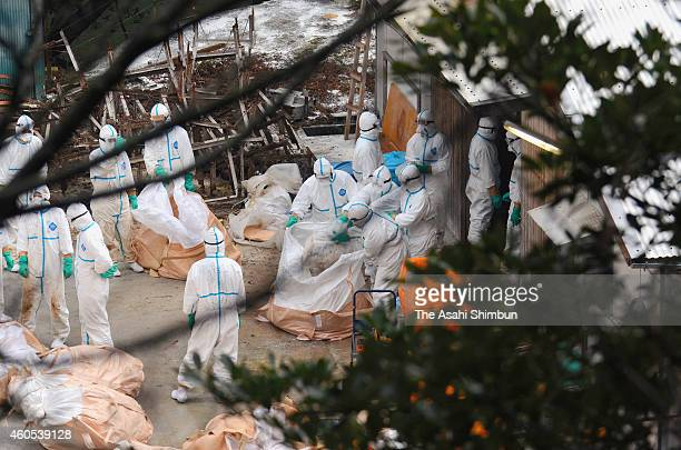 Miyazaki prefecture staffs dispose of culled chickens at a farm on December 16 2014 in Nobeoka Miyazaki Japan 4000 chickens were culled at a farm...