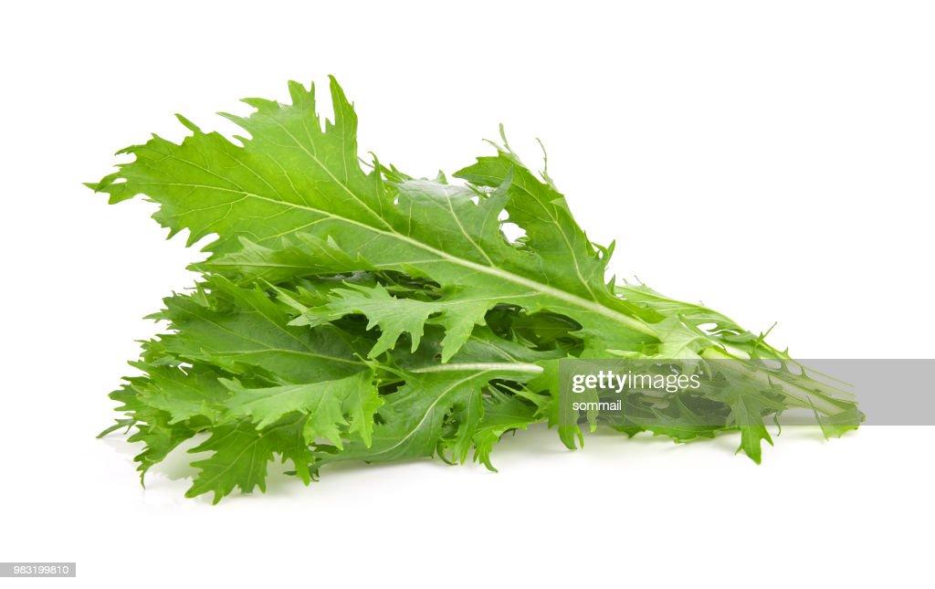 Mizuna lettuce isolated Japanese Mustard, vegetable salad for good health on white background : Stock Photo
