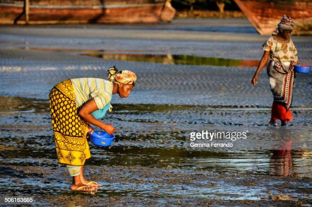 Mkokotoni, Zanzibar, Tanzania Women collecting shellfish at low tide at the end of the day in a fishing village in Zanzibar.