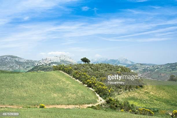 Málaga Landscape