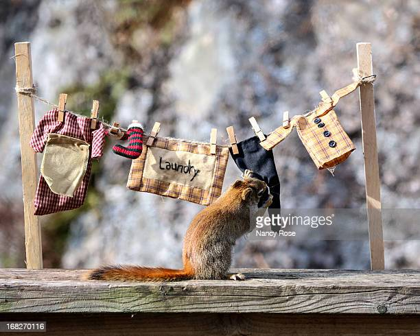 mmmm fresh laundry on the line - bedford nova scotia stock pictures, royalty-free photos & images