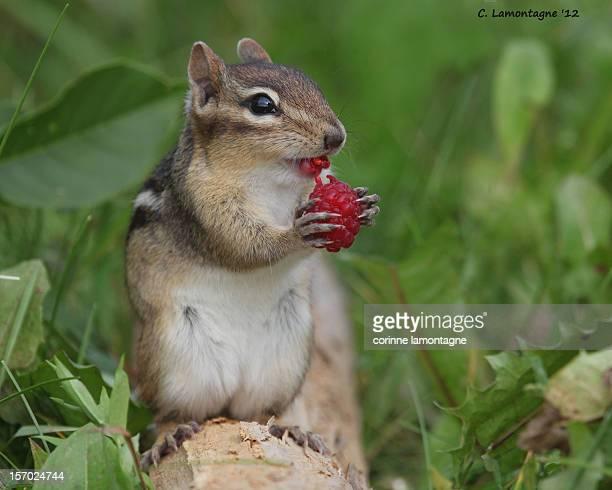 Mmmm Raspberries :)