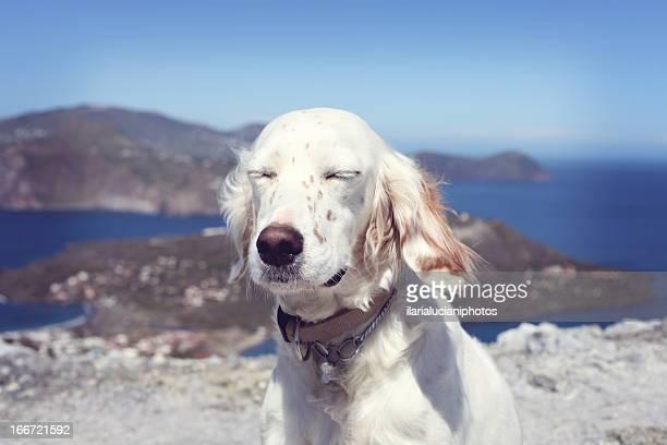 'Mmmmm... sun'