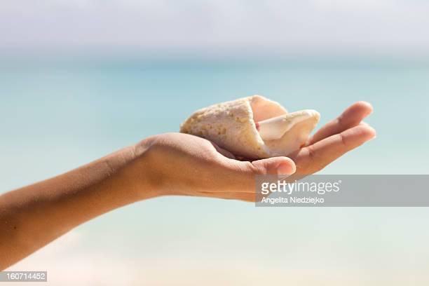 mão segurando concha fundo azul do mar caribenho - mão stock photos and pictures