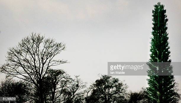 A mobile phone antenna disguised as a pine tree stands on farmland March 24 2004 near Berkhamstead in England The disguising of phone antennas helps...