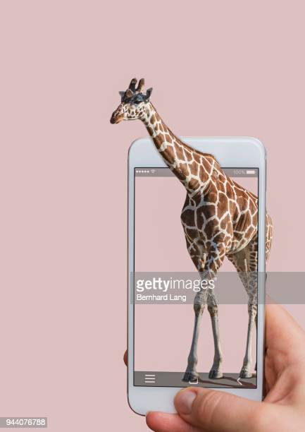 Mobile Phone displaying giraffe coming out of phone