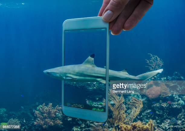 Mobile Phone displaying shark coming out of phone