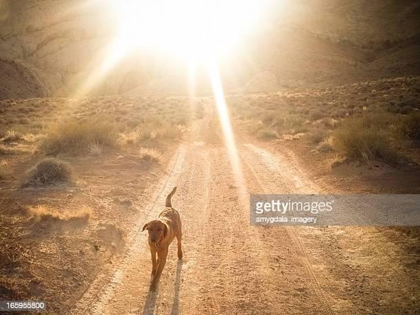 mobilestock sunshine dog