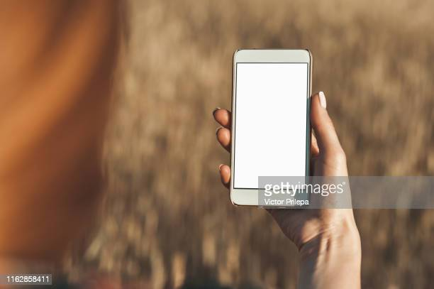 mock up of the smartphone in the hand of the girl, on the background of the field. - human hand stock pictures, royalty-free photos & images