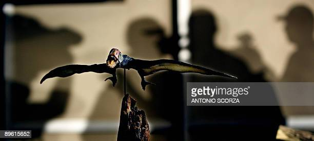 A mockup of a Jeholopterus ningchengensis during a presentation of pterosaurus wings structures studies August 5 2009 at the Historic Museum in Rio...