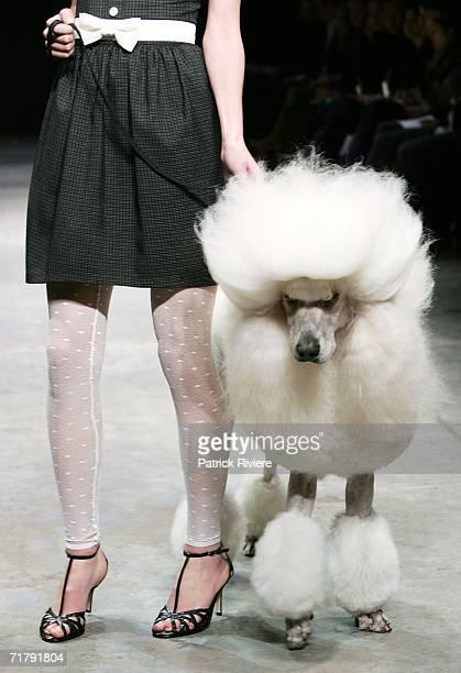 Model and a dog showcase designs by New Generation designer ShowOff during Rosemount Australian Fashion Week Transeasonal 2007 at The Showroom, St...