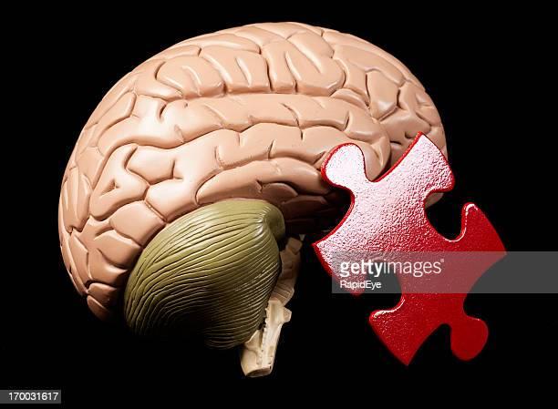 モデル脳のジグソーピース:人間の心が puzzling