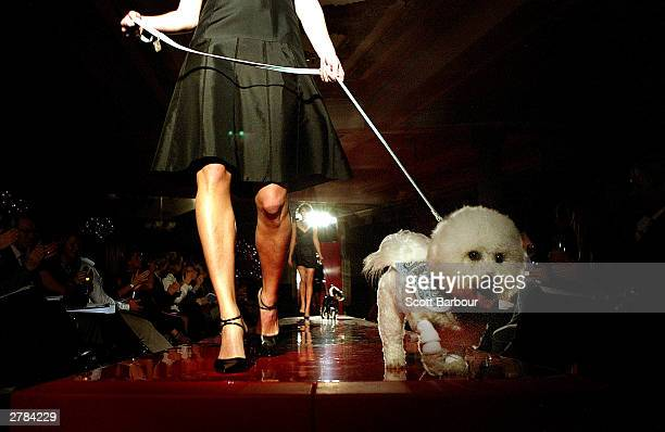 Model dog walks the catwalk parading the latest day and evening wear during the Pet-a-Porter canine fashion show December 4, 2003 in London. The new...