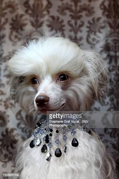 Model dog wearing jewellery