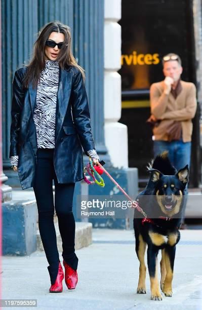 Model Emily Ratajkowski is seen walking her dog on January 29, 2020 in New York City.