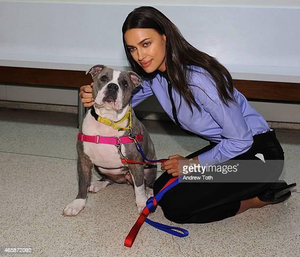 Model Irina Shayk poses with american bulldog-mix Gracie during Irina Shayk visits ASPCA's Adoption Center at ASPCA Adoption Center on March 11, 2015...