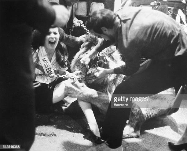 Model Nell Theobald cries out as the lion with which she was posing for promotion photos inside the New York Coliseum bites and claws at her leg...