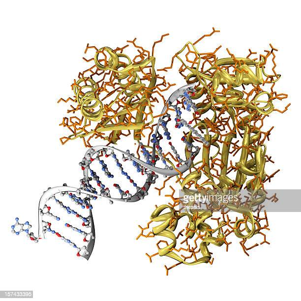Modell von einen krebserregenden Einfassung, DNA