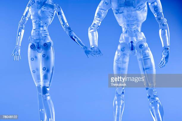 model of a female and a male - anatomical model stock pictures, royalty-free photos & images