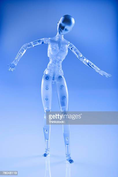 model of a female - anatomical model stock pictures, royalty-free photos & images