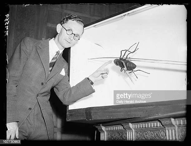 Model of a housefly 1944 A photograph of Mr ED Eyles with a model of a housefly at a meeting of the Royal Entomological Society in Queen's Gate South...