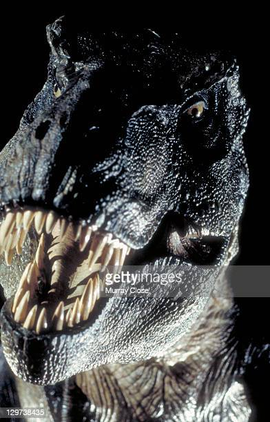A model of a Tyrannosaurus Rex made for the film 'Jurassic Park' 1993