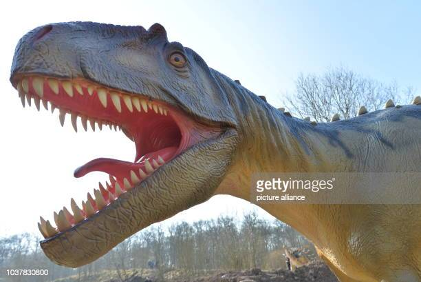 A model of an Allosaurus can be seen at the Dinosaur Park Teufelsschlucht in ErnzenGermany 18 March 2015 Opening on 4 April 2015 the new park will...