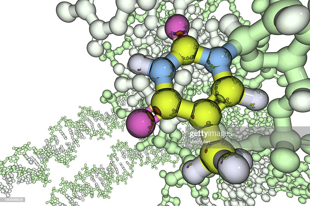 Model of DNA Base: Thymine : Stock Photo